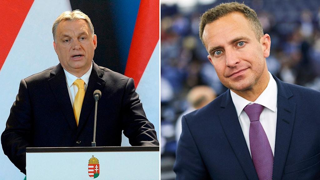 Viktor Orban och Tomas Tobé