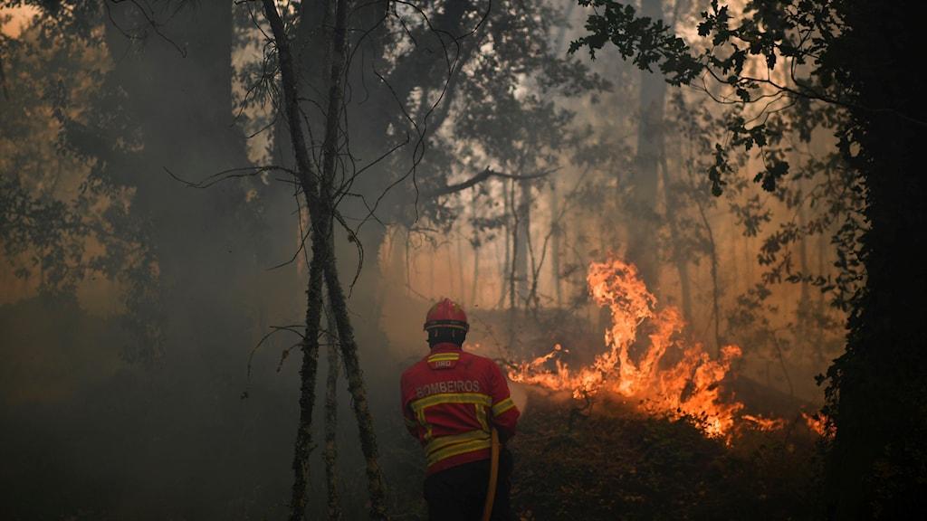 Portugalbrand