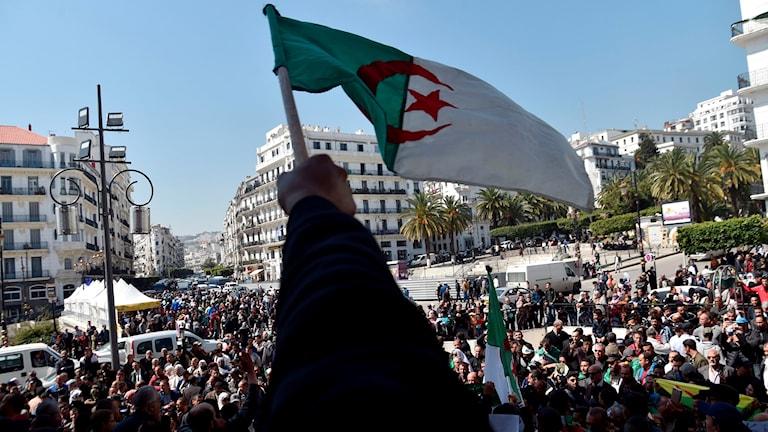 Algeriets flagga som hålls upp framför demonstranter