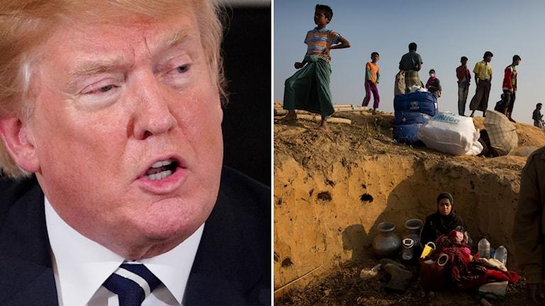 Donald Trump. Rohingyer i ett flyktingläger.