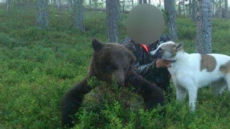 Björn, jaktbrott