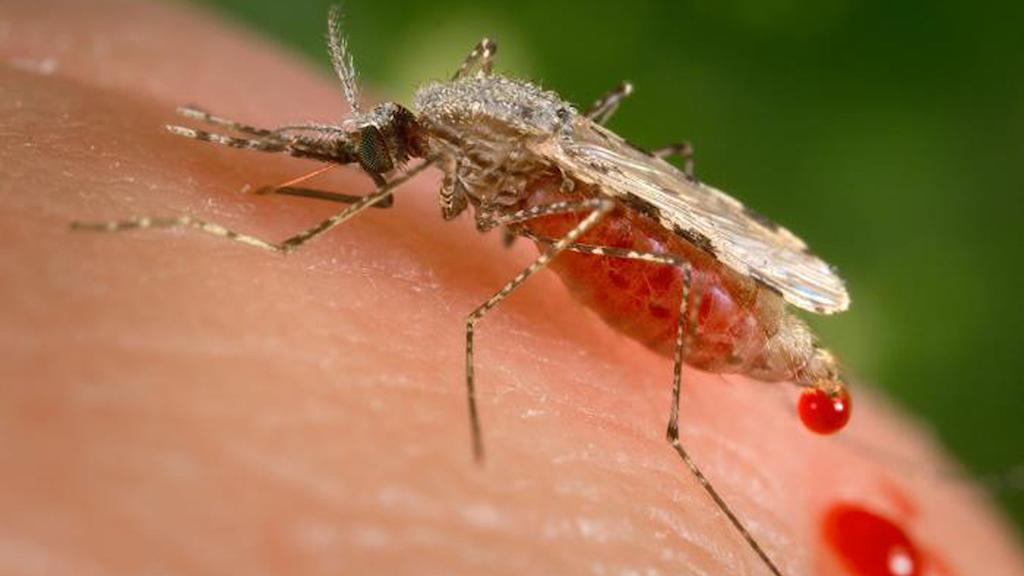Nervgiftet PMP1 hittades i bakterier i mangråveträsk i Malaysia och i regnskogsmark i Brasilien.