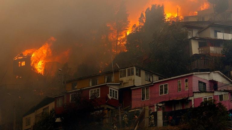 Skogsbrand i Valparaiso i Chile
