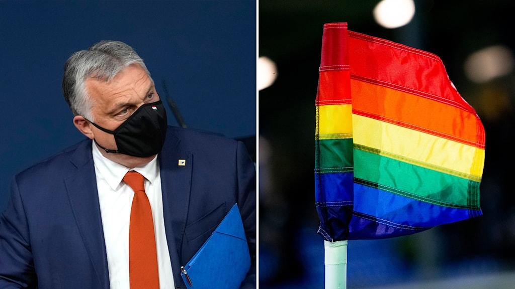 Ungerns Viktor Orban och en prideflagga.
