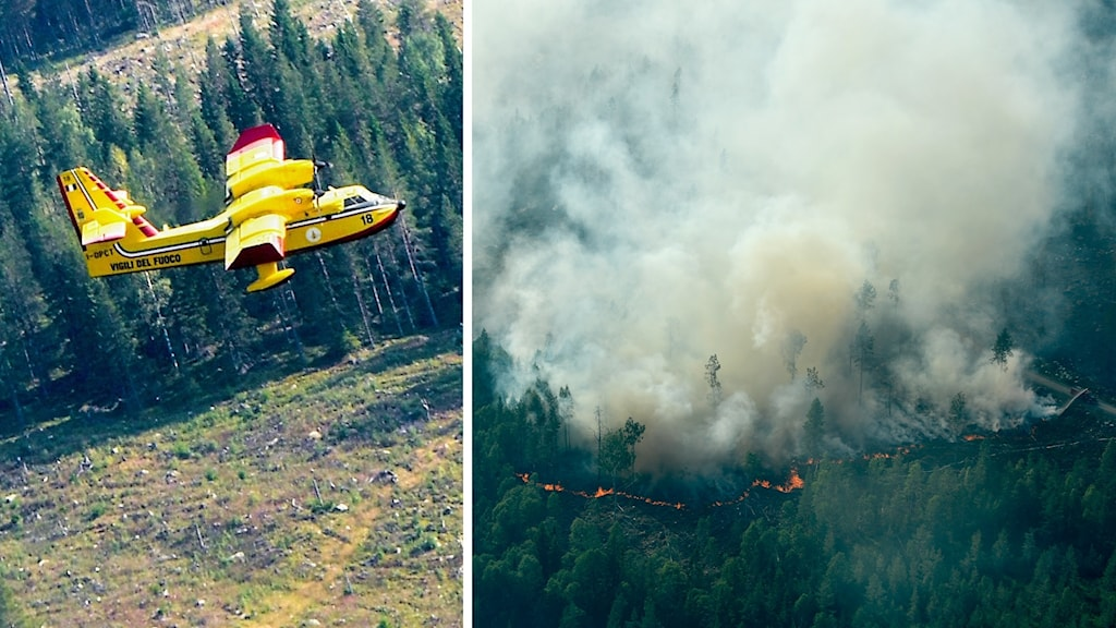 En italiensk Canadair CL-415 vattenbombare i arbete vid skogsbranden utanför Ljusdal.