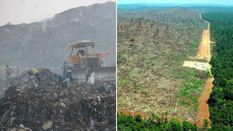 Tvådelad bild. Till vänster en soptipp i Indien och till höger skövling av Amazonas.