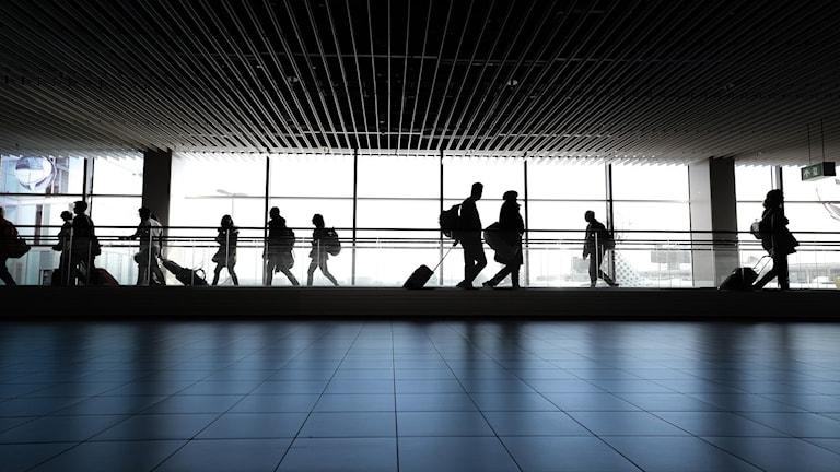 Siluetter av resenärer med resväskor på flygplats.