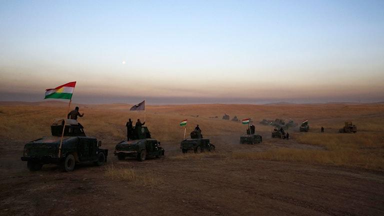 Peshmerga med  en konvoj mot Mosul