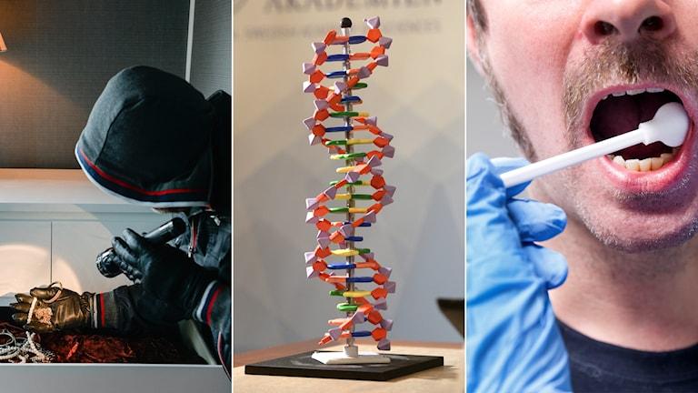 Tredelad bild: inbrottstjuv, dna-spiral, man som dna-testas med en tops i munnen