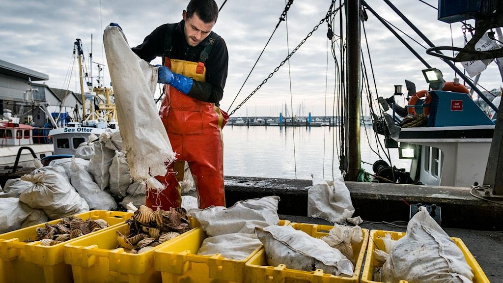 Fiskare tömmer fisk ur nät.