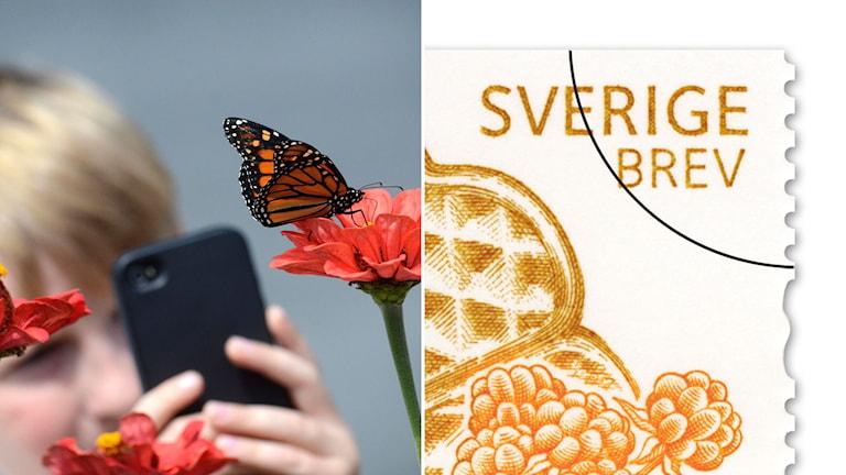 mobilkamera fotar fjäril och över hörn av frimärke