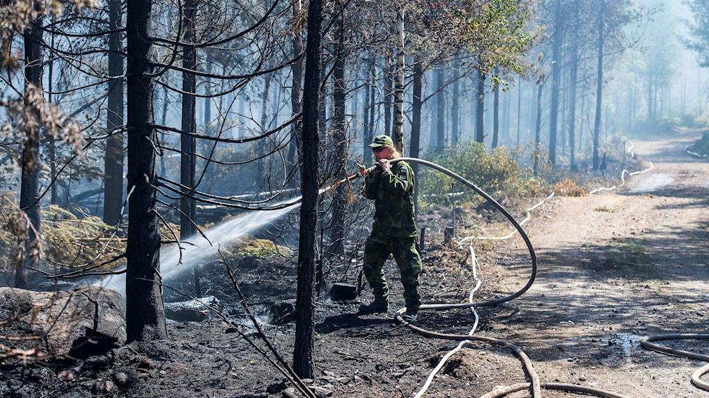 En person håller på att släcka en skogsbrand.