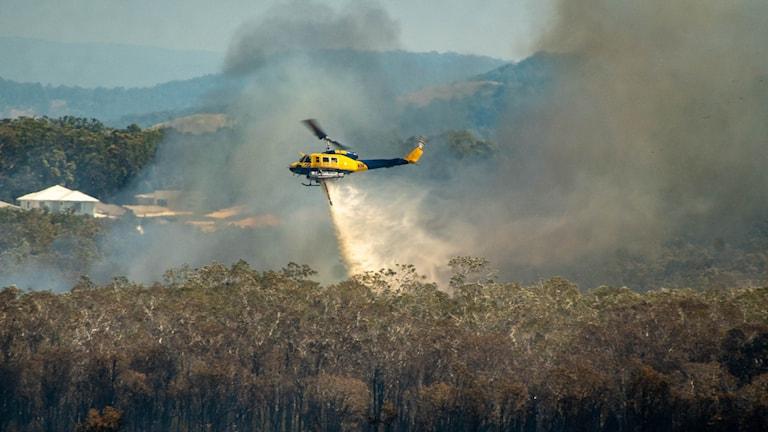 Omfattande skogsbränder har drabbat Australien,  värst drabbat är delstaten Queensland.
