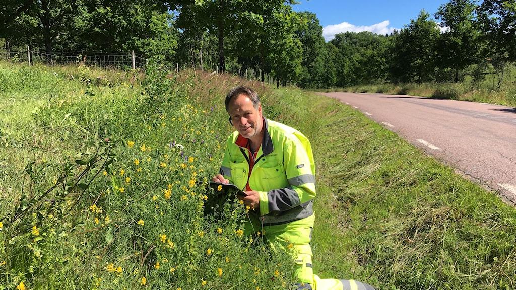 Mats Lindqvist från Trafikverket har hittat flera värdefulla ängsarter i vägkanten utanför Karlstad. Fotograf: Gabriella Johansson