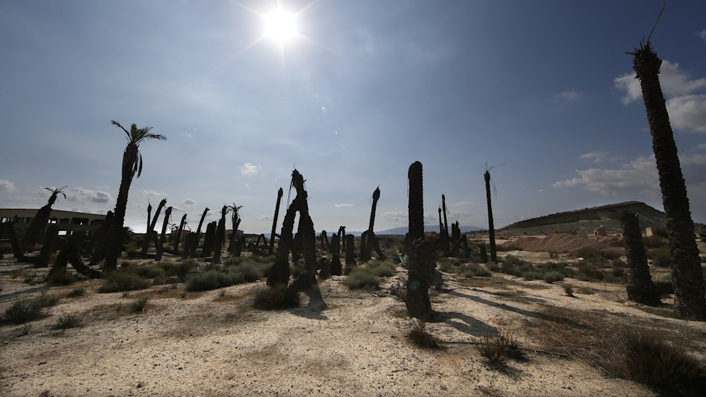 Arkivbild på torka i sydöstra Spanien.