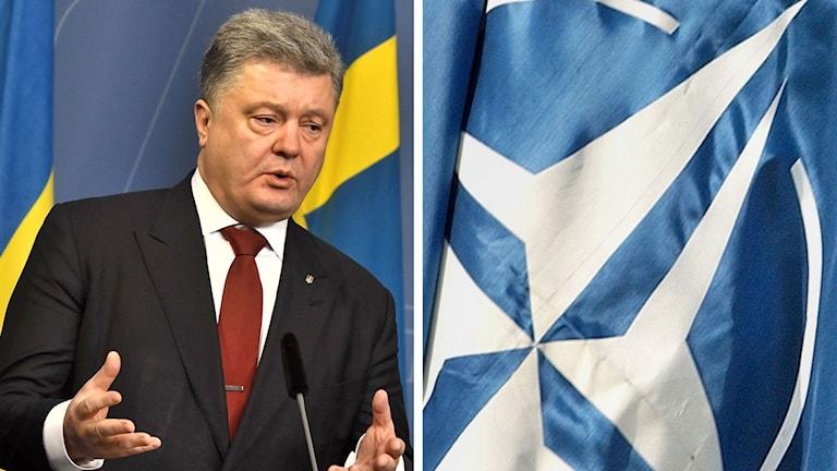 Ulkrainas president Petro Porosjenko vill in i Nato -- snabbt.
