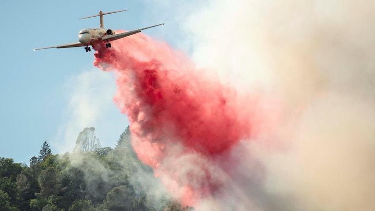 Här bekämpas största branden i delstatens historia