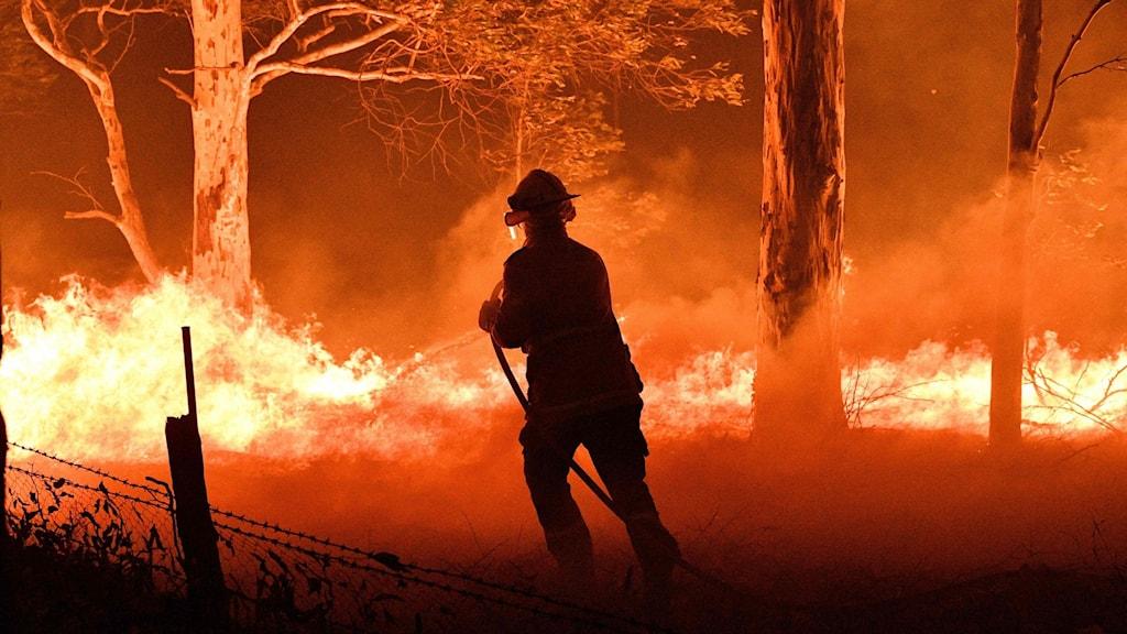 Brandman släcker brand i skog