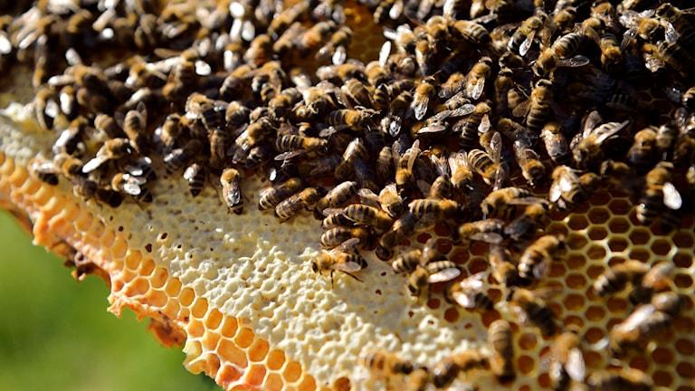 En kaka med honung och bin