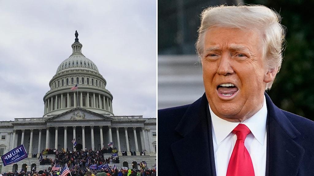 Montage med kapitolium och Donald Trump