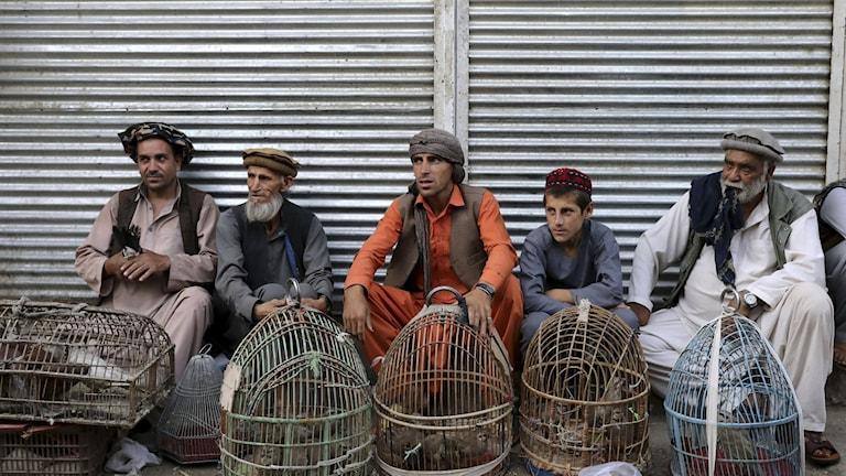 Fredssamtalen i Afghanistan ställs in. Samtidigt säger amerikansk militär att det militära våldet riskerar att trappas upp.