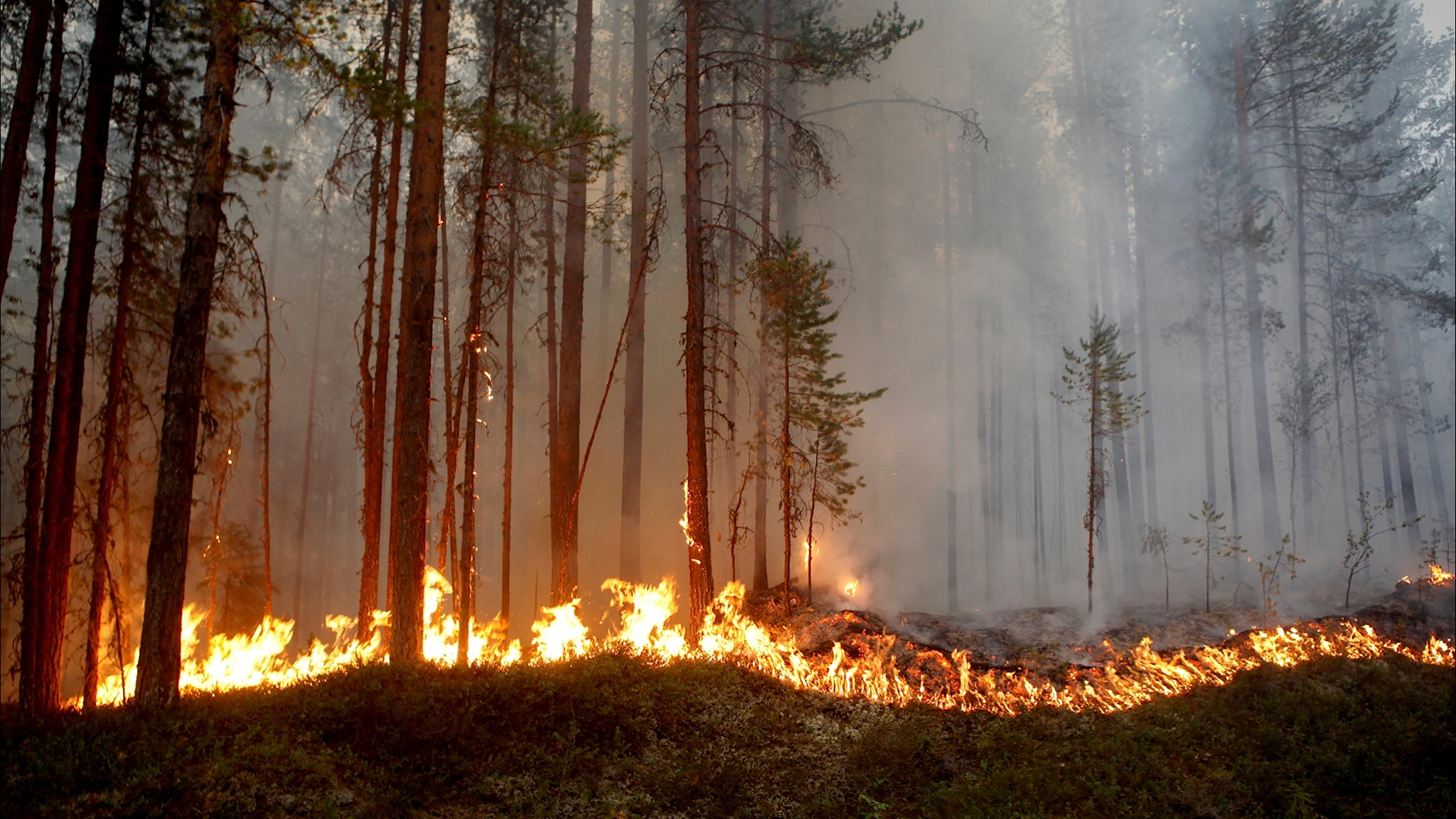 Intensiv kamp mot skogsbränderna
