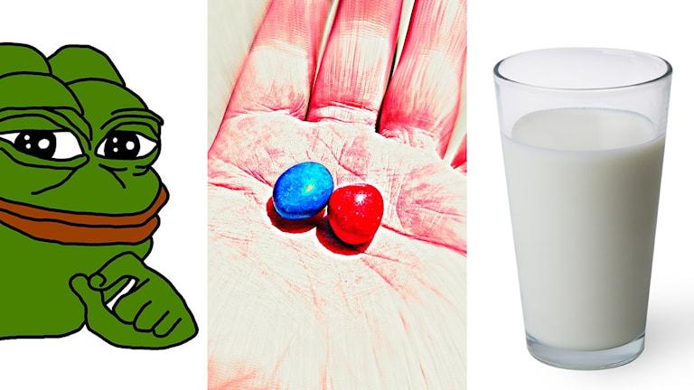 Ekots granskning visar att Nordisk alternativhöger vill samla den svenska högerextremismen, och de samarbetar med både nazister vit makt-grupper. Alternativhögern har lagt beslag på olika symboler som från början inte alls kopplades till högerextremism. Det röda pillret från filmen Matrix, grodan Pepe och även vardagliga saker som ett glas mjölk är exempel på vad som har använts.