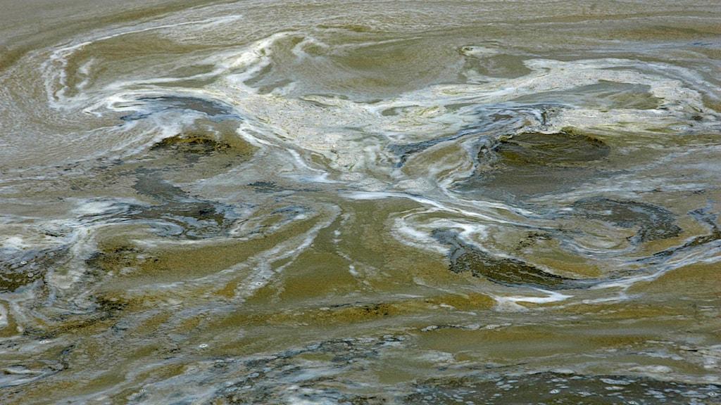 Bild på alger i vatten.