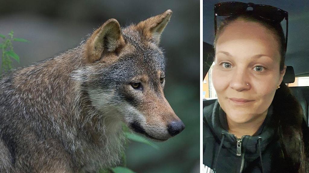 En varg och en närbild på en person.