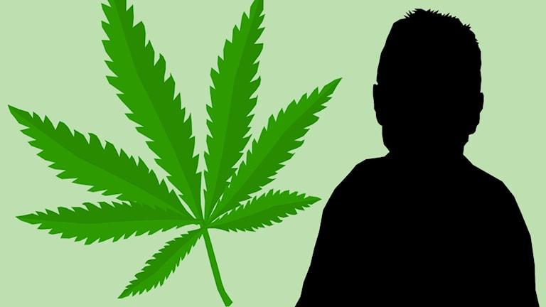 Cannabisblad och siluett av person.