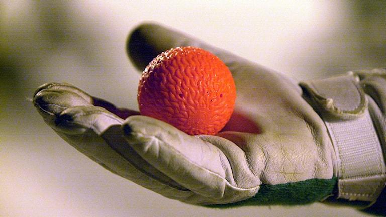 Bandyboll i målvaktshandske. Foto: Gunnar Lundmark/Scanpix