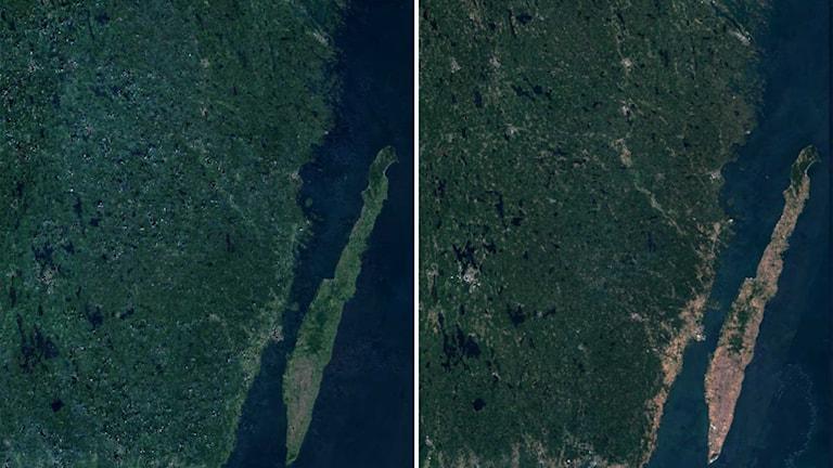 Bilder där Kalmar län är sett från rymden. Till vänster mycket grönt, på den högra bilden syns torkan tydligt med mer gul och brun färg.