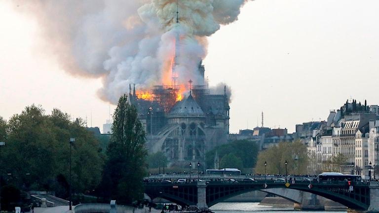 Notre Dame brand