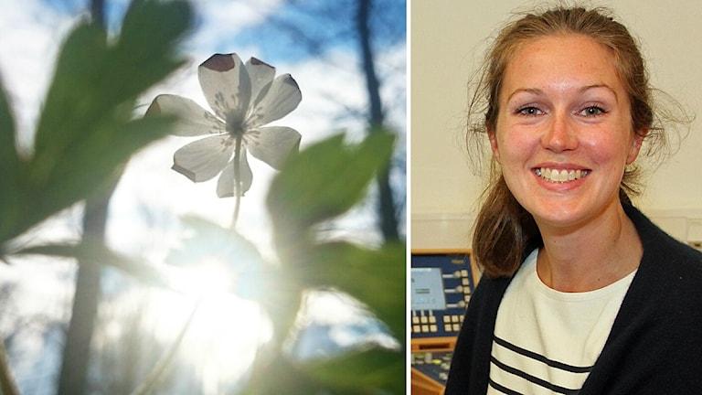 Solsken, blomma och Madeleine Granlund