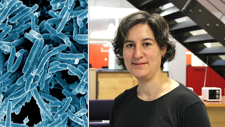 TBC Bakterier & Lisa Labbé Sandelin smittskyddsläkare