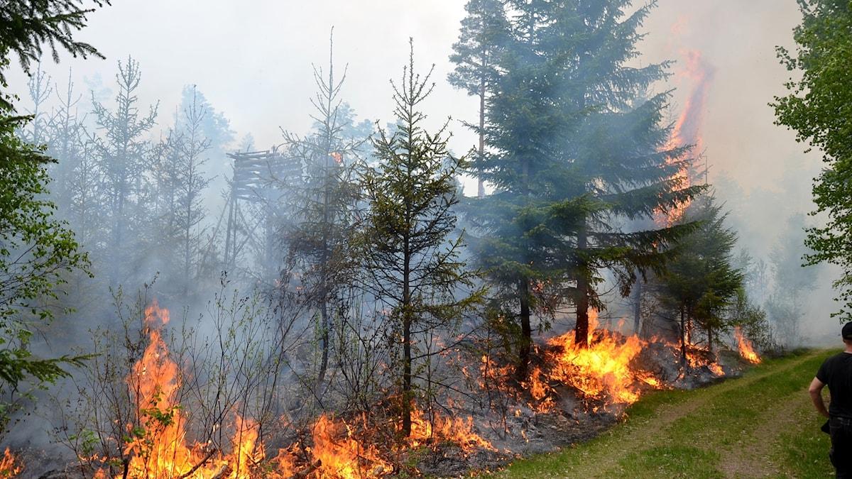 Skogsbrand Målerås