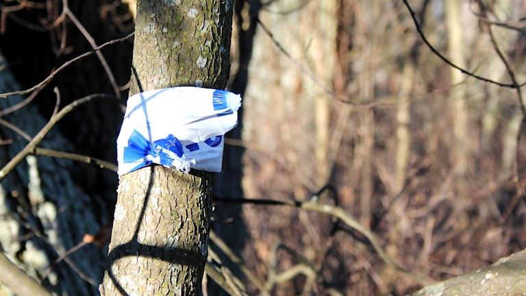 En polisavspärrning som är snurrad kring ett träd.