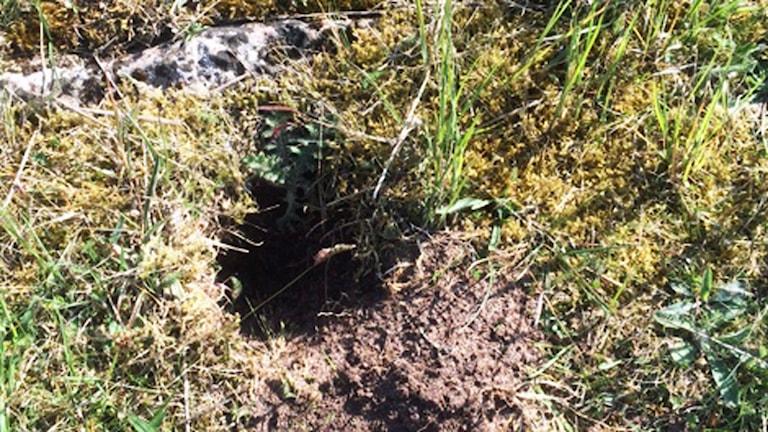 Hål i marken inne i Ismanstorps borg.
