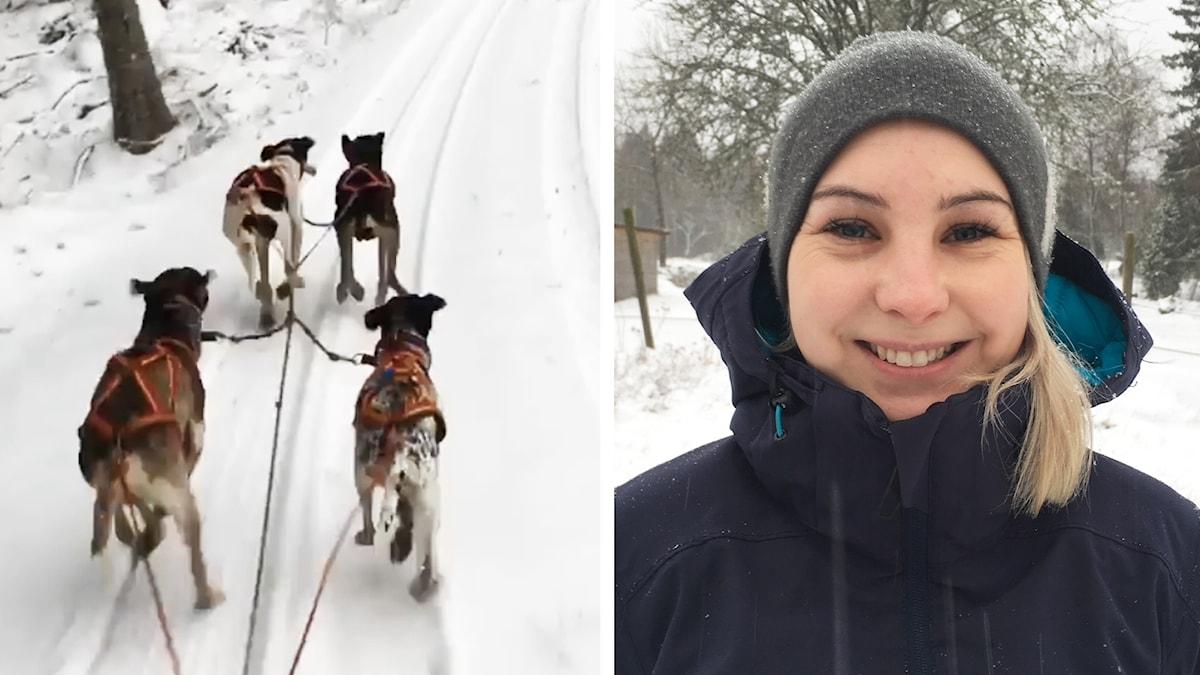 Hundar och en leende Sussie Grönberg.