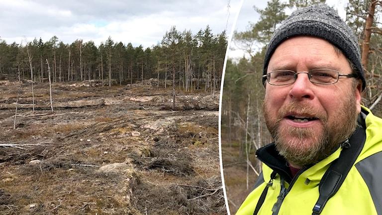 Skog som har avverkats.
