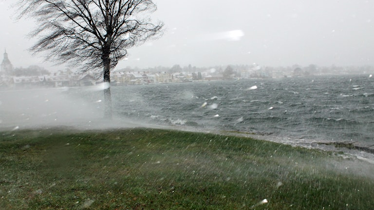 Snöoväder vid vattnet. Foto: Johanna Lindblad Ahl/Sveriges Radio