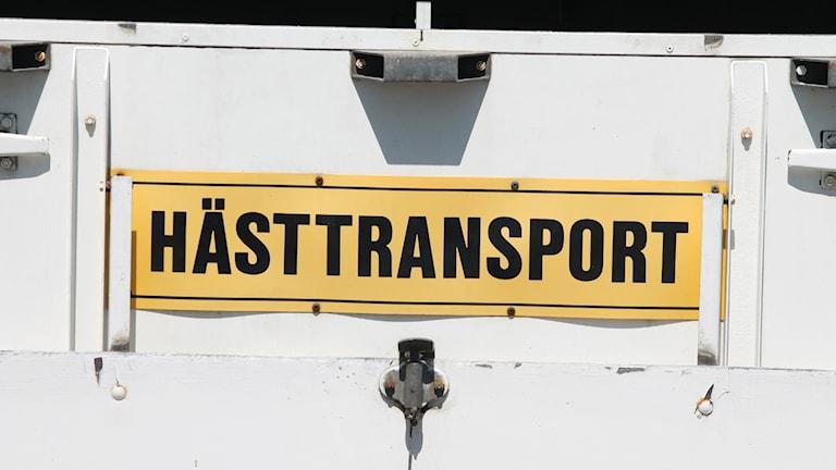 Hästtransport. Foto: Nick Näslund/Sveriges Radio
