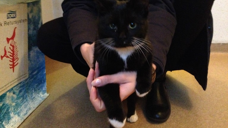 Katten som sprang runt på Ölandsbron var svart och hade vita tassar. Foto: Privat.