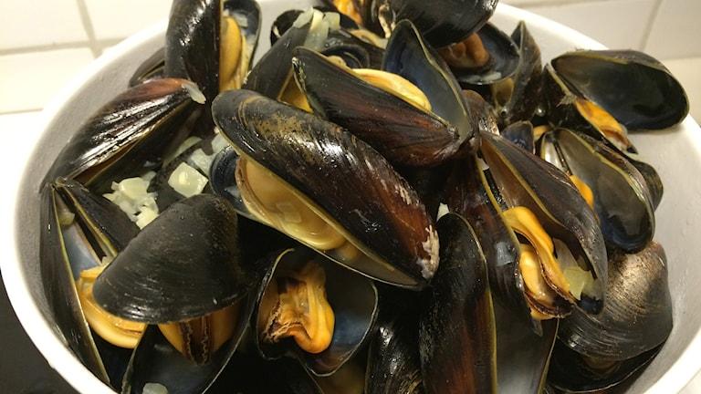 Kokta musslor. Foto: Niklas Skagerlind/Sveriges Radio