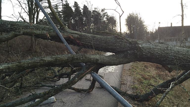 Träd och lyktstolpe över cykelbana efter stomen Egon. Foto: Ann-Sofie Ottosson/Sveriges Radio