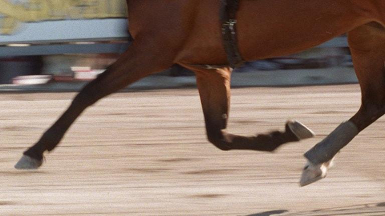Travhäst.