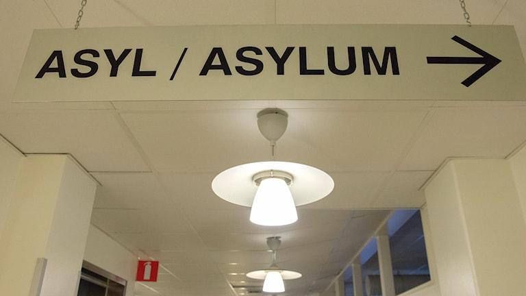 Asylmottagning. Foto: Maja Suslin/TT
