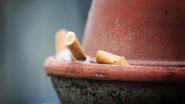 Cigarettfimpar. Foto: Nick Näslund/Sveriges Radio