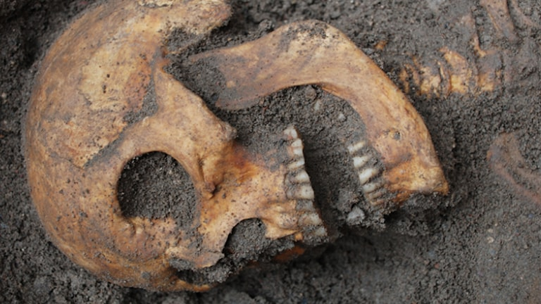 Skelett hittat i Kalmar slott