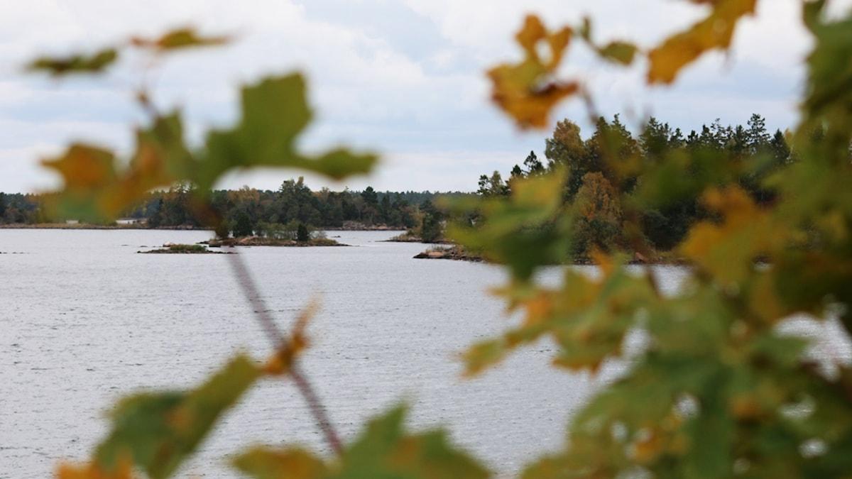 Kustlinje, skärgård. Foto: Nick Näslund/Sveriges Radio